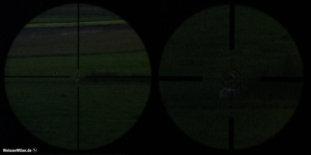Eine Fuchsscheibe in der Dämmerung. Anvisiert mit 3-facher (links) und 9-facher Vergrößerung (rechts). Das Heranzoomen bringt bei diesen Lichtverhältnissen keinen Vorteil, da das Bild mit zunehmender Vergrößerung immer dunkler wird.